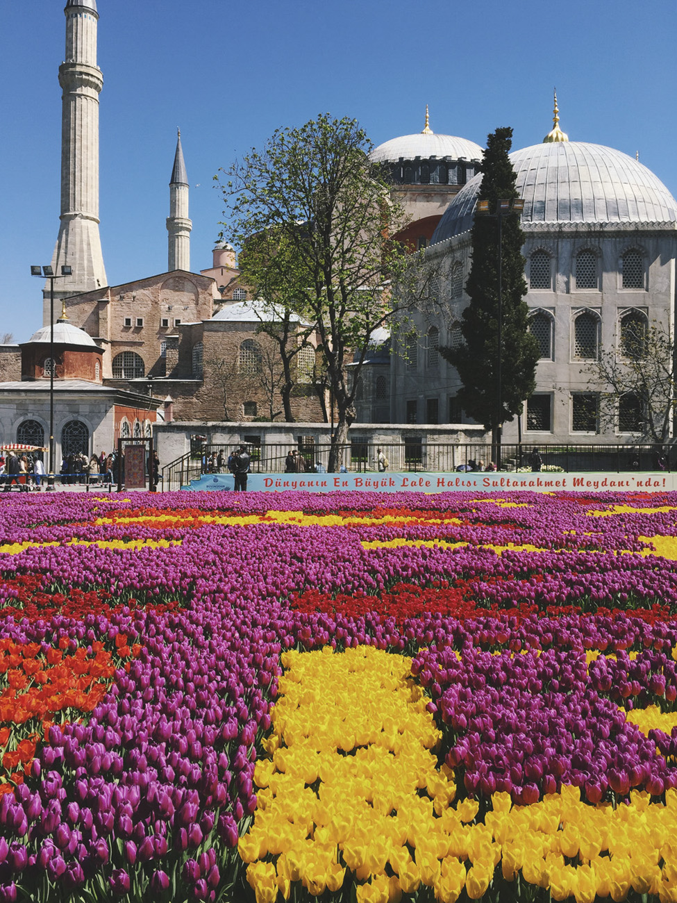 turkey tulips sultanahmed mosque