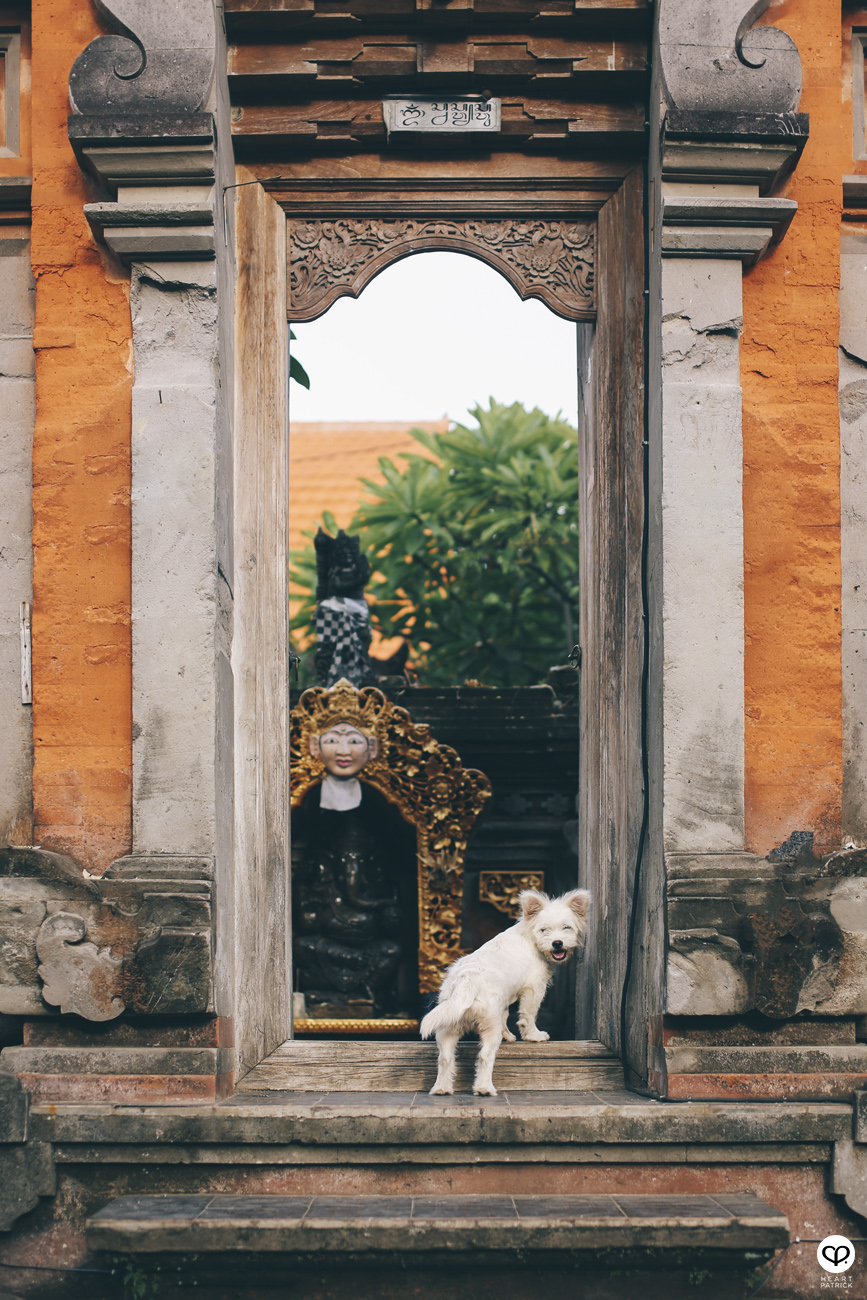 heartpatrick travel indonesia bali ubud culture street photography