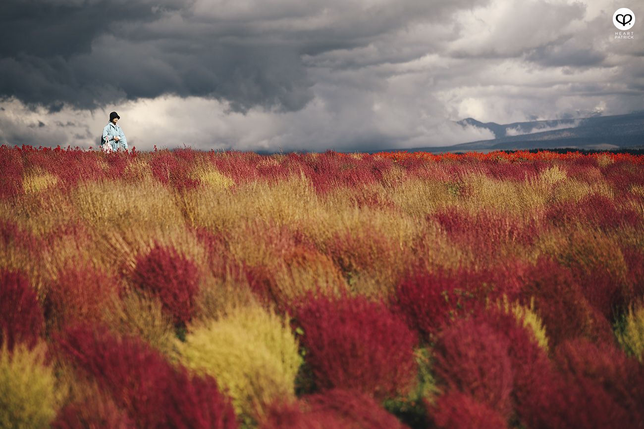 heartpatrick travel photography photojournalism hokkaido japan street furano flower field