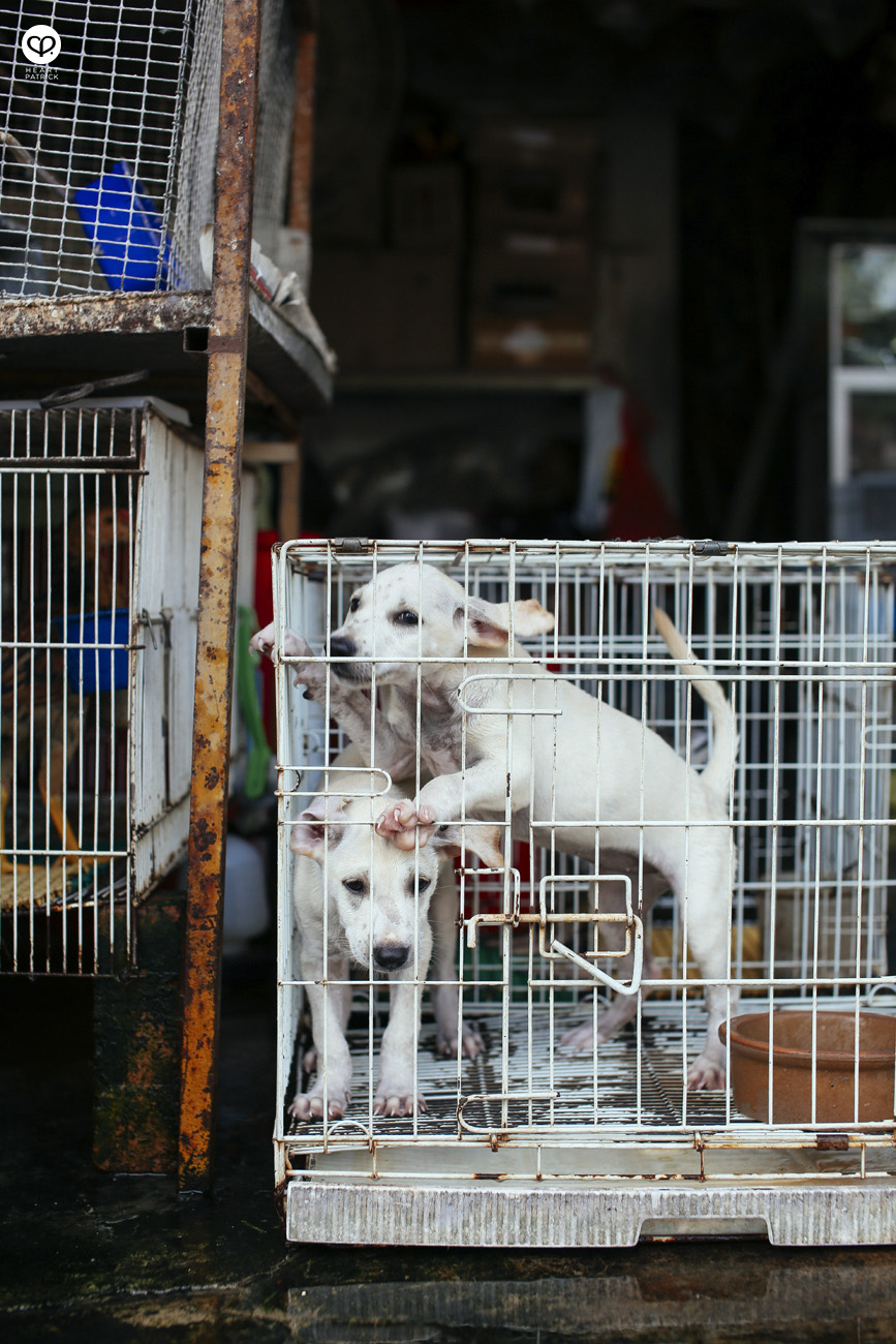 malacca melaka jonker urban heritage street photography puppies captivity